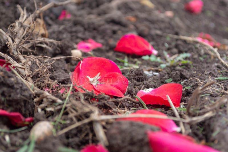 Petali caduti sulla terra sotto le loro piante immagine stock libera da diritti