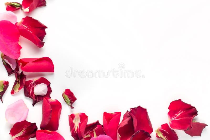 Petali dei fiori di Rosa su fondo bianco Fondo di giorno di biglietti di S Disposizione piana, vista superiore, spazio della copi immagine stock