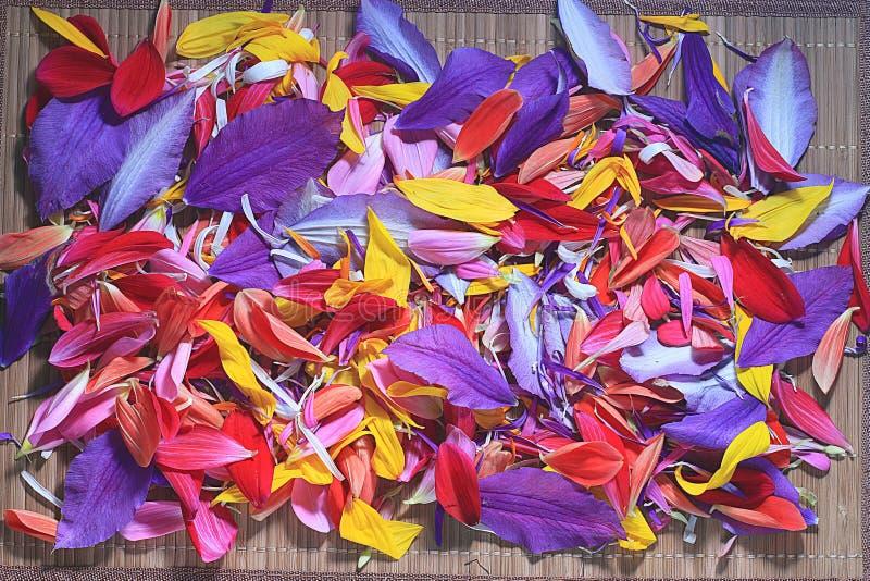 Download Petali del fiore fotografia stock. Immagine di fiori - 55362658