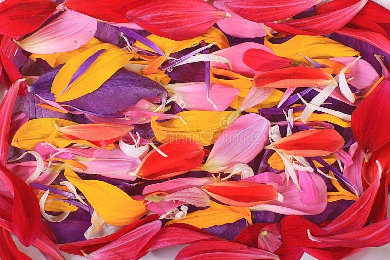 Download Petali del fiore immagine stock. Immagine di colori, verde - 55362707