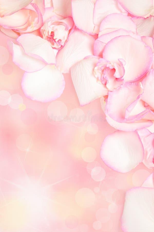 Petali di rosa dentellare immagini stock
