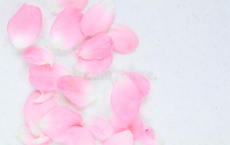 Petali di Rosa dentellare 01 Perfezioni per le cartoline d'auguri del fondo e gli inviti delle nozze, il compleanno, il giorno de fotografie stock libere da diritti