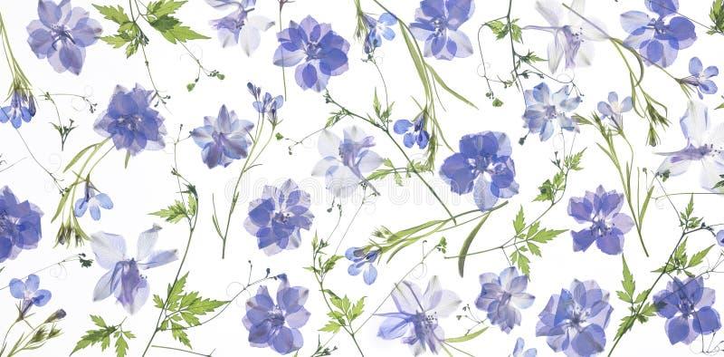 Petali e foglie porpora del fiore fotografie stock libere da diritti