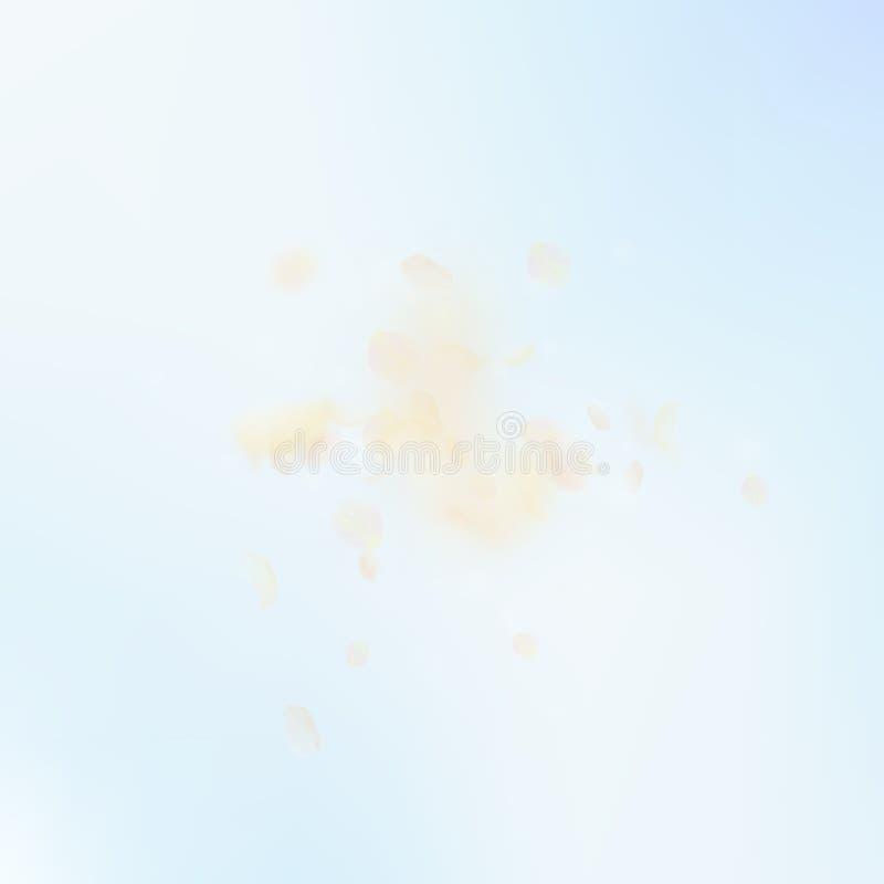Petali giallo arancione del fiore che cadono ROM sciccosa illustrazione di stock