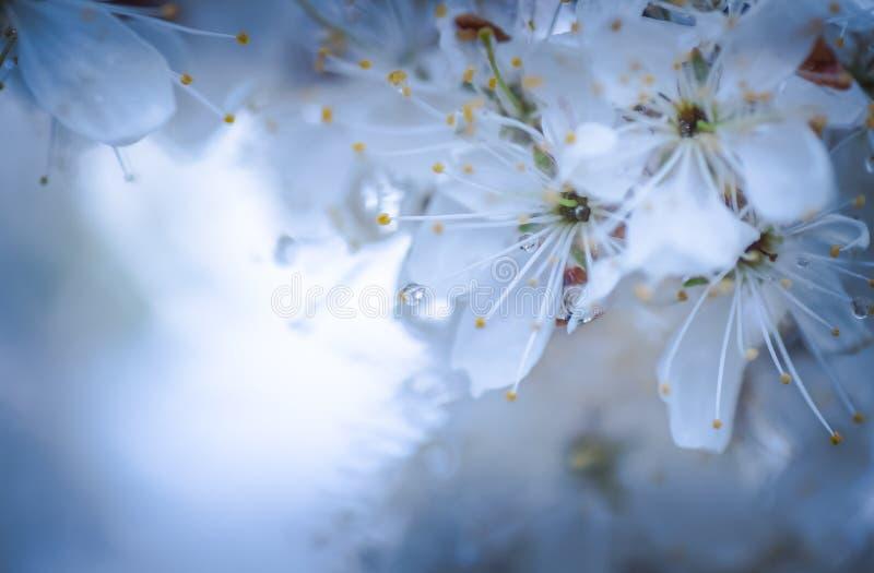 Petali nella pioggia fotografie stock