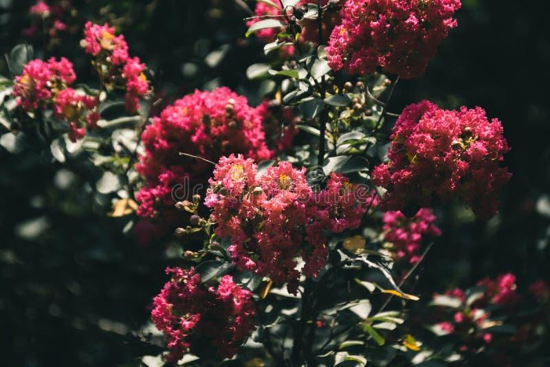 Petali rossi fotografia stock