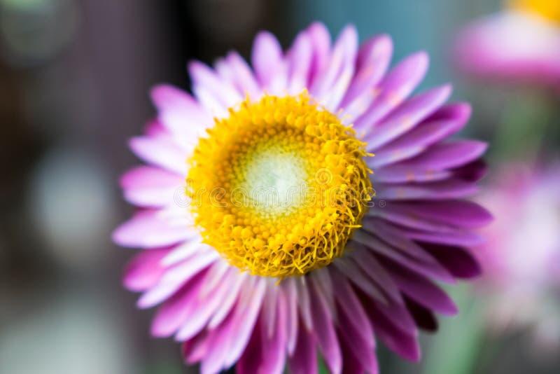 Petali sconosciuti del fiore sottosopra meravigliosamente fotografia stock libera da diritti