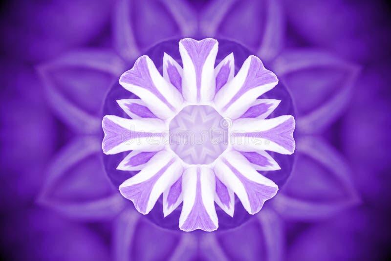 Petali viola con effetto del caleidoscopio, passo astratto del fiore selvaggio fotografia stock