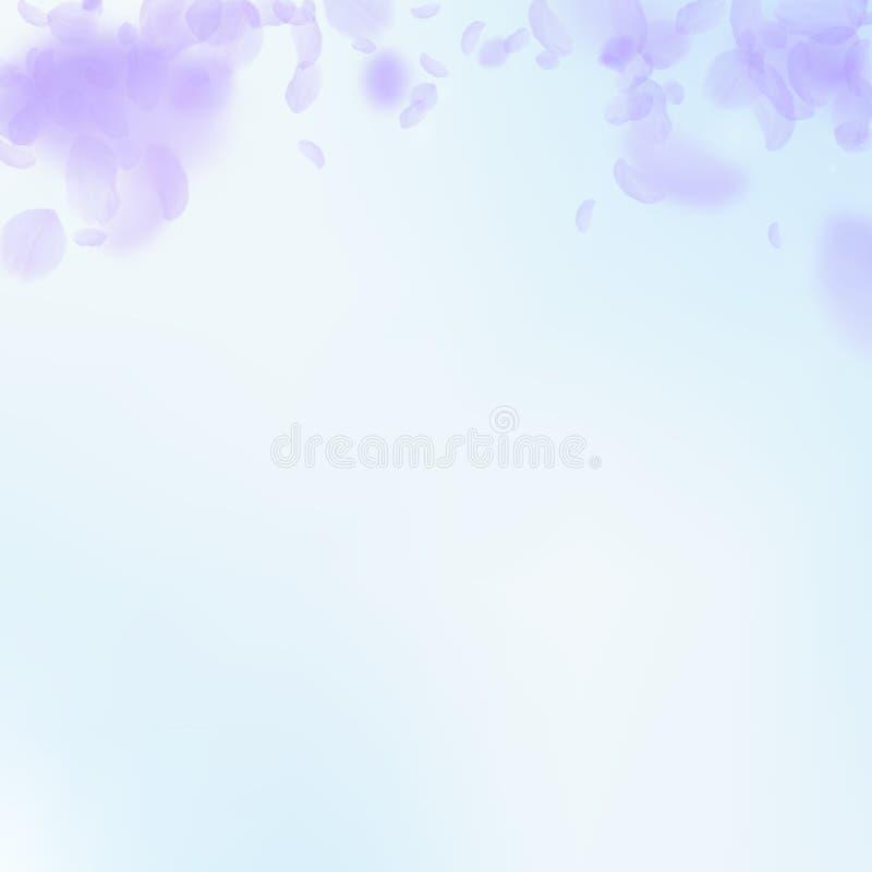 Petali viola del fiore che cadono Romantico reale illustrazione di stock