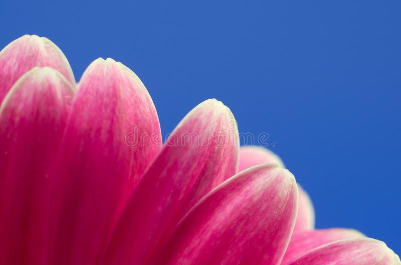 Petalo del fiore immagine stock