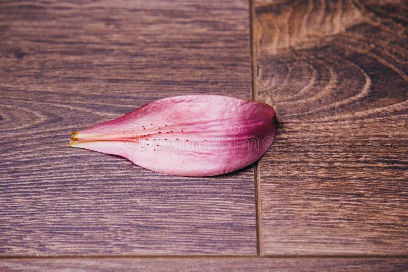 Petalo del fiore rosa del giglio su un primo piano rustico di legno della tavola in un vaso, spazio della copia Colpo dello studi fotografia stock