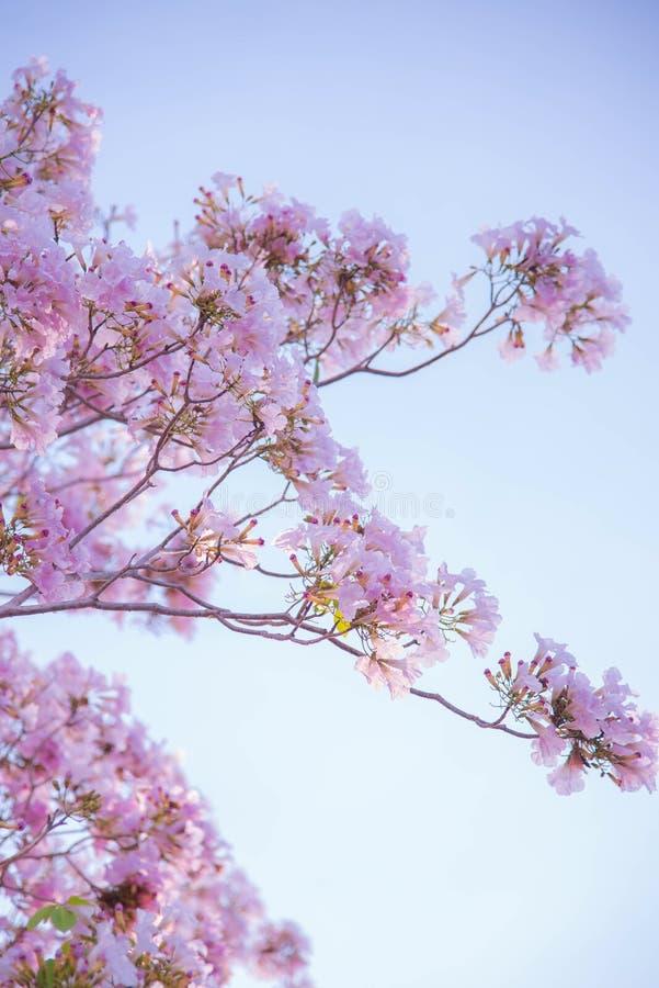 Petalo rosa del fiore immagine stock libera da diritti