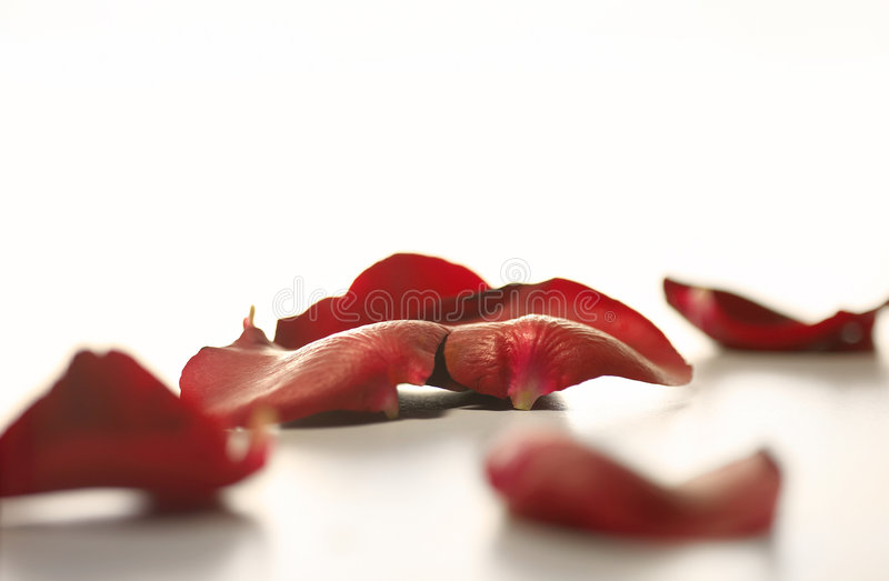 Download Petals Royalty Free Stock Photography - Image: 4697007