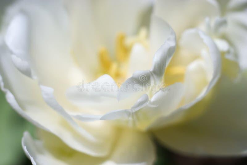 petals fotografering för bildbyråer