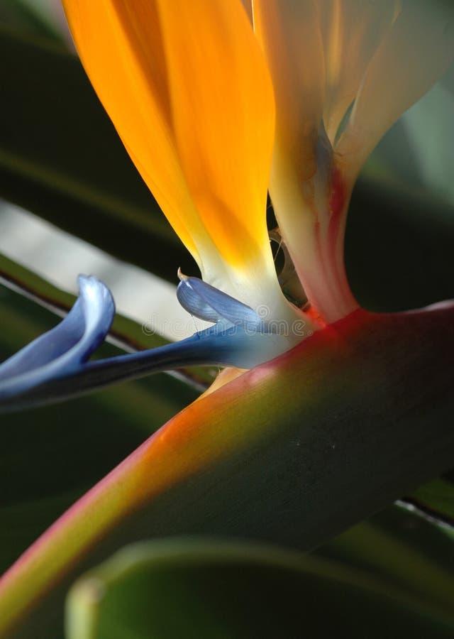Petals Of Paradise Royalty Free Stock Photo