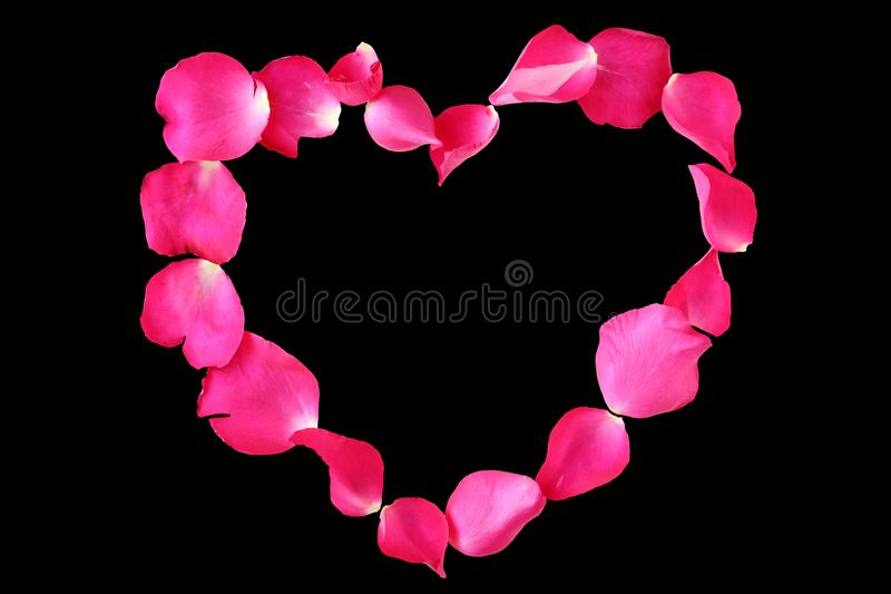 Petals of rose flower in heart shape isolated on black background stock image