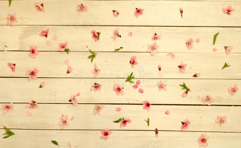 Petals scattered on vintage wood background, top view. royalty free stock image