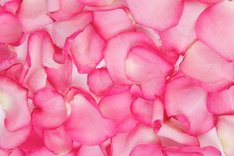 Download Petals steg fotografering för bildbyråer. Bild av brigham - 17223185