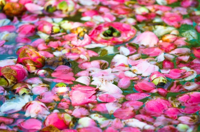 Petals on water stock photos