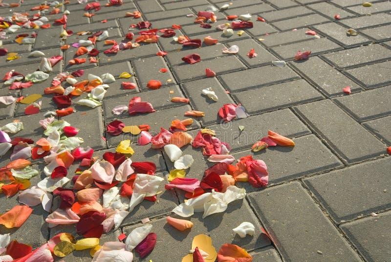 petalsväg royaltyfri bild