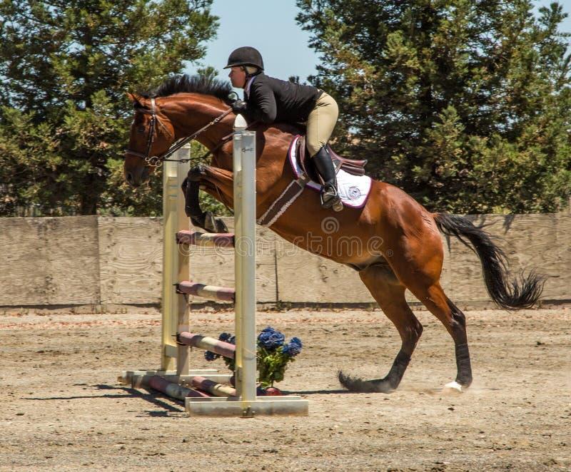 Petaluma, халиф/29-ое июля 2012: Женщина скачет лошадь стоковые фотографии rf