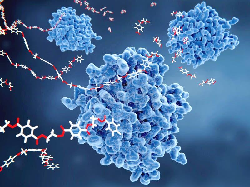 PETase enzym som ner bryter Husdjur-plast- royaltyfria foton