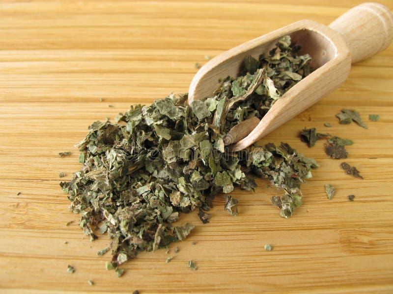 Petasites vulgaris, folium de Petasitidis images stock