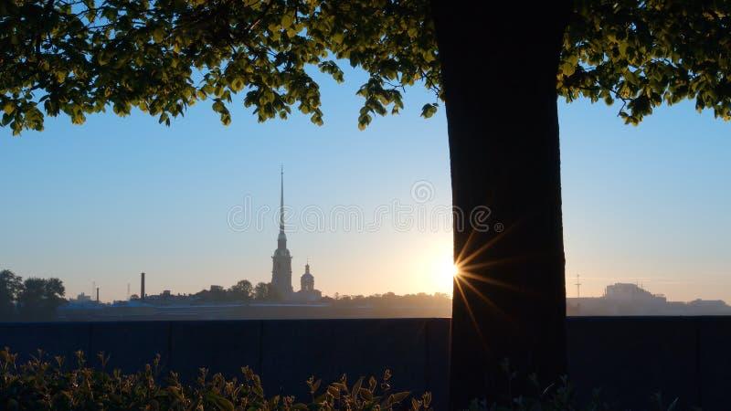 Peter e Paul Fortress e árvore no cuspe da ilha em um nascer do sol - St Petersburg de Vasilievsky, Rússia imagem de stock royalty free