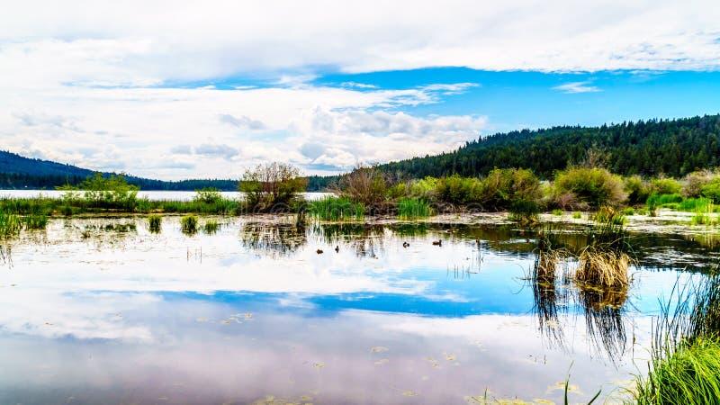Peter Hope Lake negli altopiani di Shuswap in Columbia Britannica, Canada fotografia stock