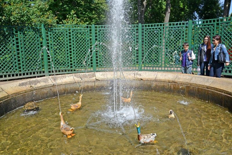 peterhof俄国 关于喜爱的喷泉的游人 免版税库存图片