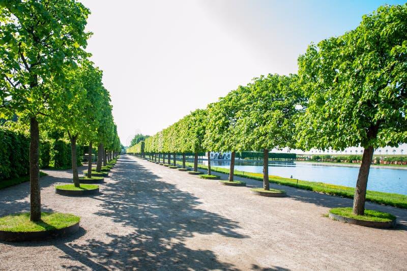 Peterhof, ŚWIĄTOBLIWY PETERSBURG ROSJA, CZERWIEC, - 06, 2019: Cropped prostokątne wapno aleje w wierzchu uprawiają ogródek obraz stock