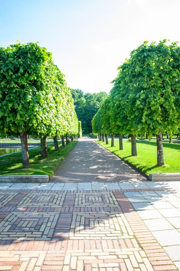 Peterhof, ŚWIĄTOBLIWY PETERSBURG ROSJA, CZERWIEC, - 06, 2019: Cropped prostokątne wapno aleje w wierzchu uprawiają ogródek obraz royalty free