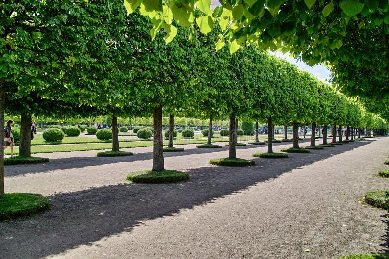 Peterhof Callejón del jardín superior fotografía de archivo libre de regalías