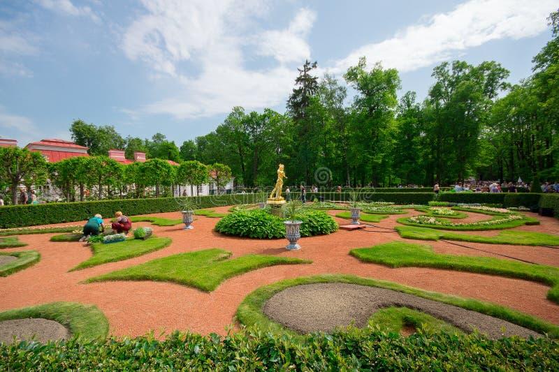 Peterhof gräsmatta royaltyfria foton