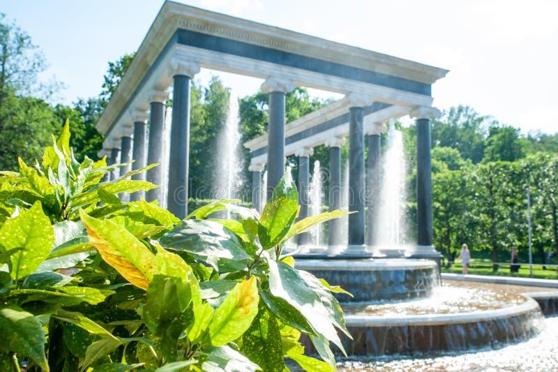 Peterhof, Heilige Petersburg, Russische Federatie, 06 Juni, 2019: De fontein van de leeuwcascade stock afbeeldingen
