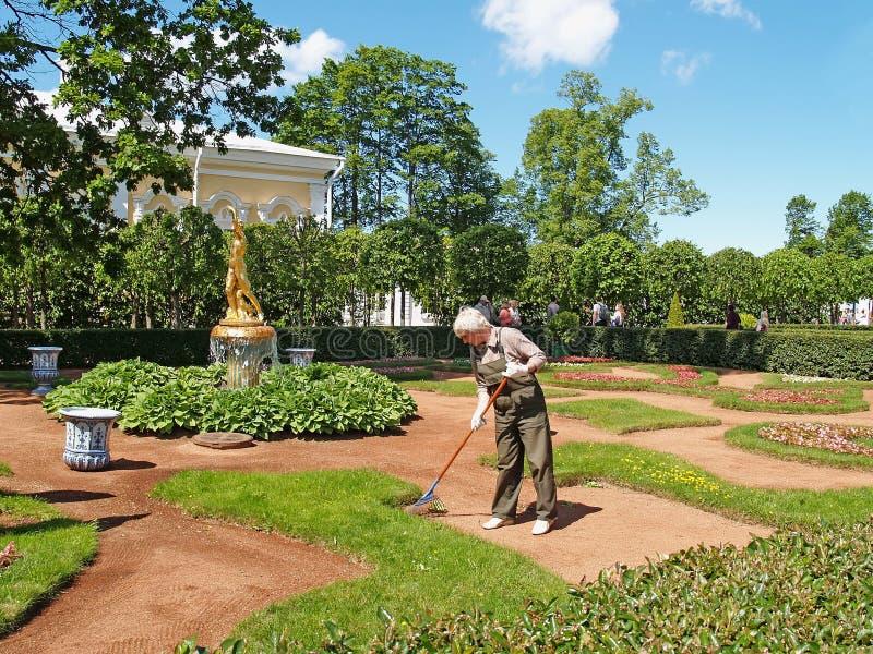 Peterhof, Rússia O guarda de serviço fêmea varre o lixo no jardim de Monplezirsky fotos de stock royalty free