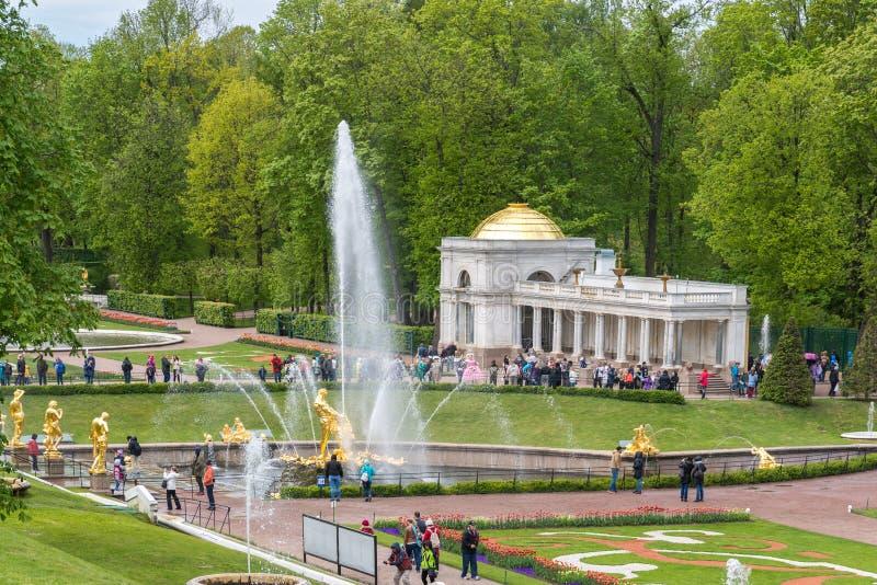 Peterhof, Rusia - 3 de junio 2017 Parque con la fuente delante del palacio fotografía de archivo libre de regalías