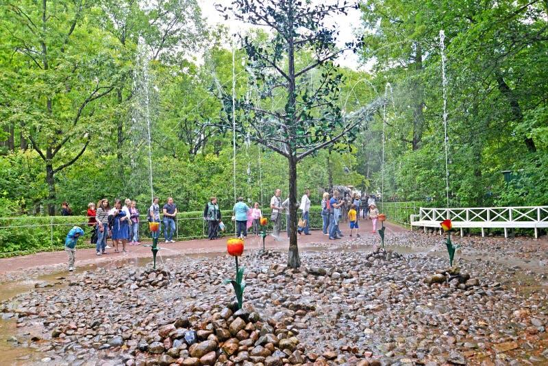 peterhof russia Den inNizhny Oaklet springbrunnsmällaren parkerar royaltyfria foton