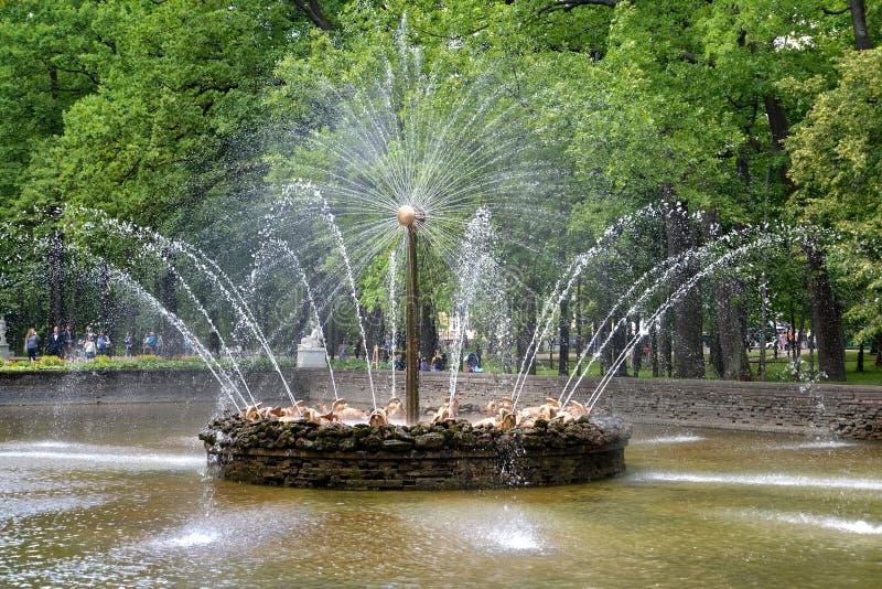 peterhof russia Den The Sun springbrunnen i Nizhny parkerar arkivfoton