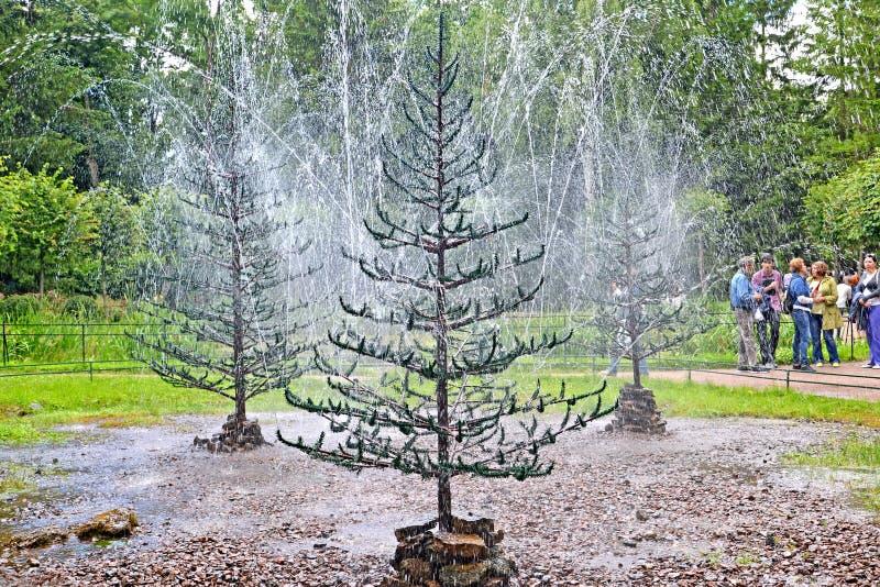 peterhof russia Denträd springbrunnsmällaren royaltyfri bild
