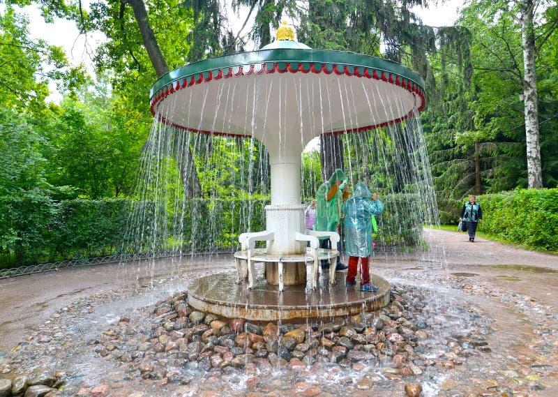 peterhof russia Paraplyspringbrunnsmällaren i Nizhny parkerar royaltyfria bilder