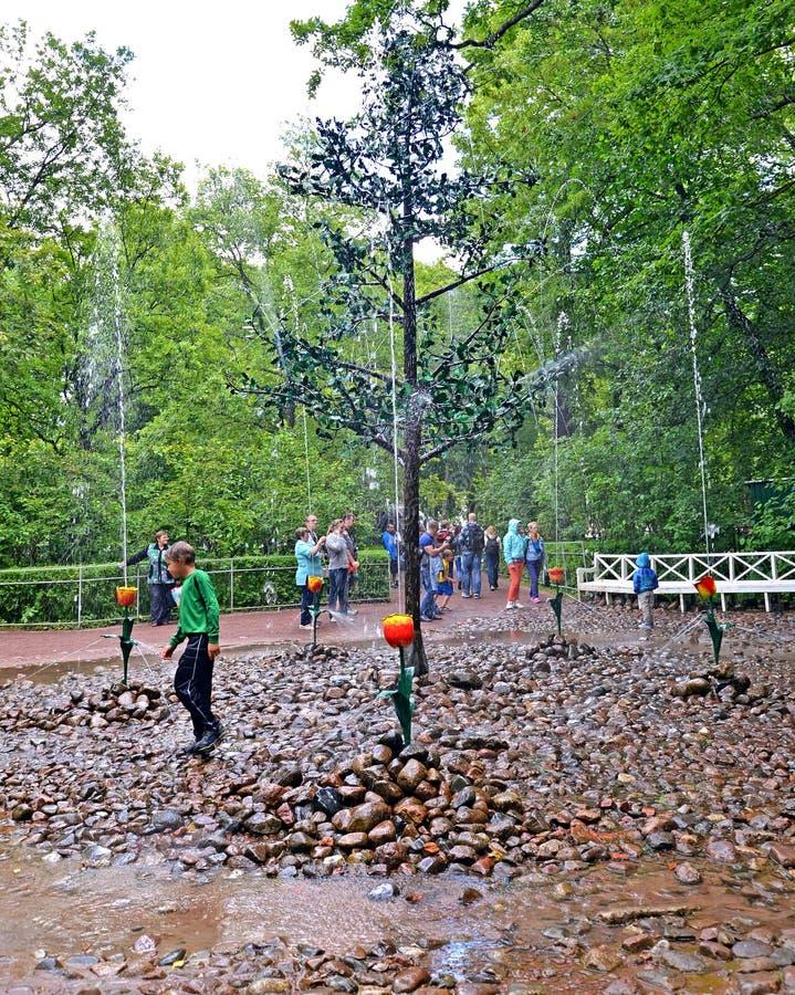 peterhof russia Turister om den Oaklet springbrunnsmällaren royaltyfri fotografi
