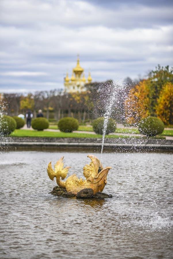 Peterhof Ryssland, Oktober 5, 2016: Vattenspringbrunn i en form av royaltyfria bilder