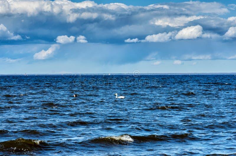 Peterhof, St Petersburg, R?ssia Vista do Golfo da Finl?ndia em um dia de mola nebuloso do conjunto do pal?cio e do parque imagens de stock