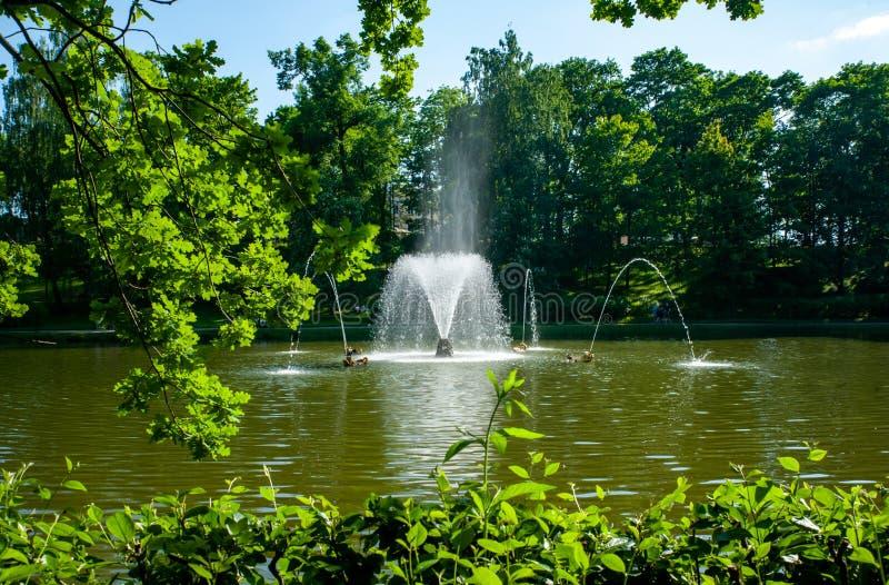 Peterhof ST PETERSBURG, RYSSLAND - JUNI 06, 2019: Springbrunnar i Petergof, härlig veiw på springbrunnen i sjön fotografering för bildbyråer