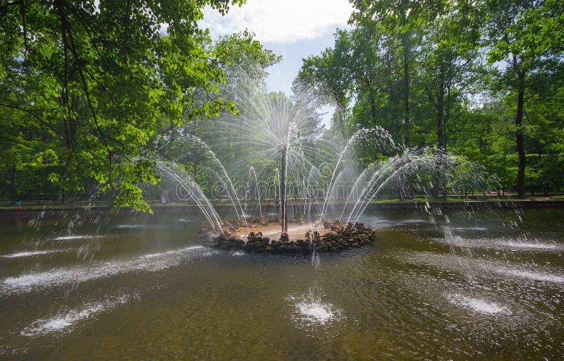 petersburg russia för peterhof för kaskadspringbrunnlion st royaltyfri foto