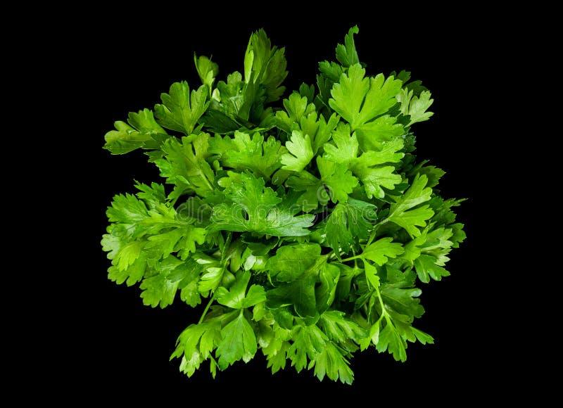 Peterselie aromatisch kruid stock foto's