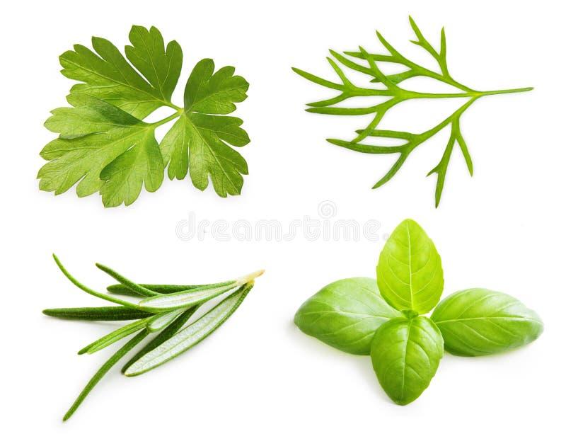 Peterseliekruid, basilicumbladeren, dille, rozemarijnkruid stock afbeelding