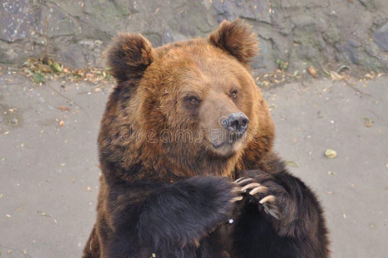 Petición la comida en el parque zoológico fotos de archivo