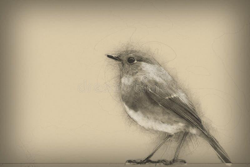 Petirrojo europeo Dibujo de lápiz digital original ilustración del vector